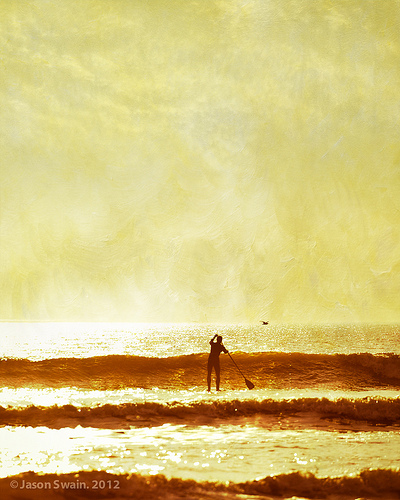 One man and his gull – Stand up Paddle Surfing
